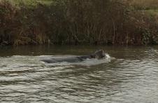 long-hippo