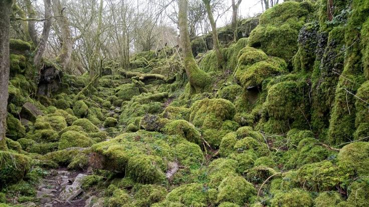 Brec Moss